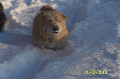 Sally enjoys the snow