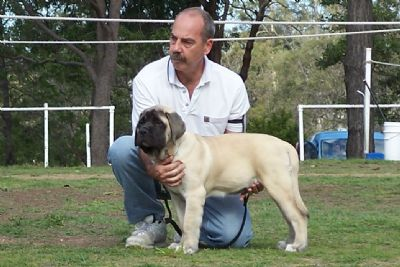 "Matrix winning ""Best Baby Puppy in Group"" at his very first show - 3 months old"