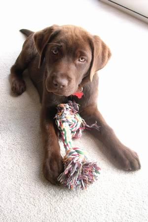 Jive's pup Jess