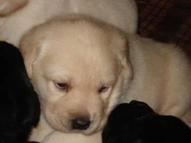 pup #5
