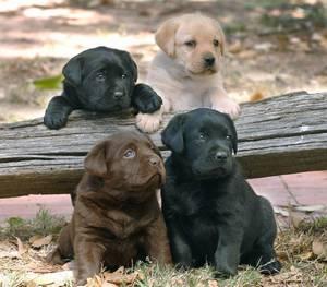 4 special pups