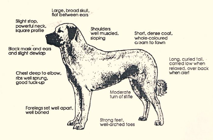 Anatolian breed standard